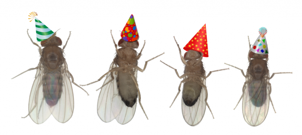 Party flies!